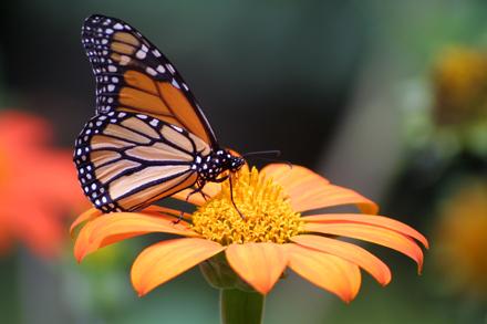 Treehill_Butterfly_Fest