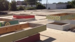 SOME OF THE STOLEN GARDEN BEDS.