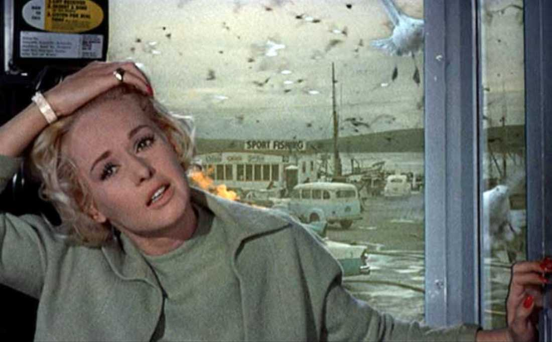 The Birds, celebrating its 50th anniversary, screens at 7pm at various movie theaters