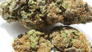 Marijuana_2