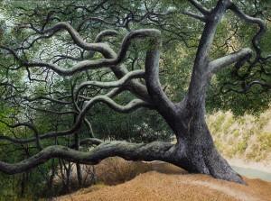 """James Blake's """"Oak Tree in Rattlesnake Canyon"""""""
