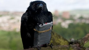 "A raven is enlisted as a suicide bomber in ""Four Lions."""