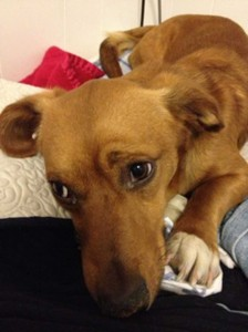 An autopsy showed that Buddy died of distemper. Courtesy Paige Carlton