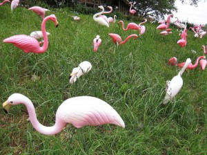 Pink Flamingos & Painted Trees is 7-8pm Wed, May 8 at the Center for Architecture.