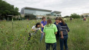 BRIT staffers conduct a census of native plants in each section of the prairie plot. Brian Hutson