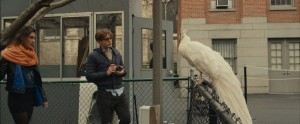 Astrid Berges-Frisbey and Michael Pitt regard a white peacock in I Origins.