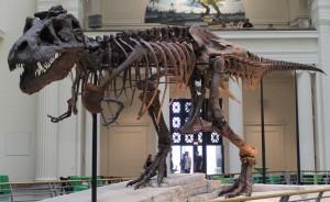 Dinosaur 13 opens Friday.
