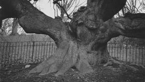 """Philip van Keuren's """"Tree VIII"""""""