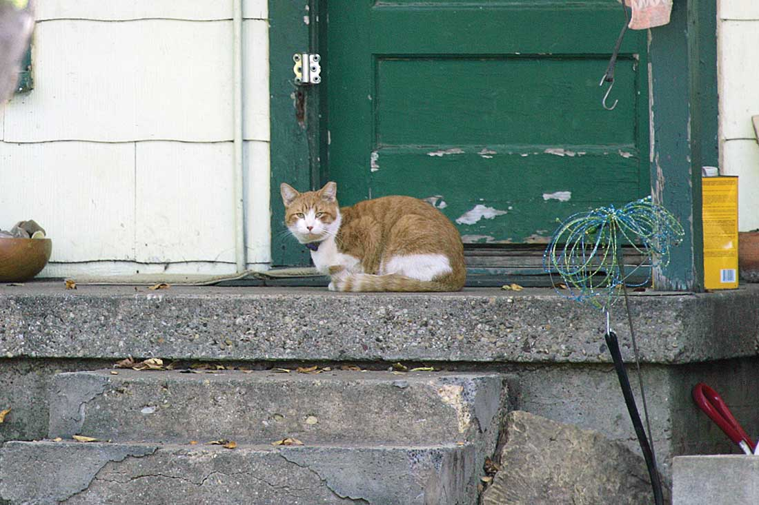 Dozens of abandoned cats still stay close to homes from which the people are gone.