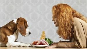 Dog-Food-466471677