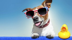 Summer-dog-485613811