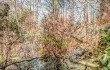 "Luther Smith's ""Swamp, Port Royal, South Carolina, March 2015"""