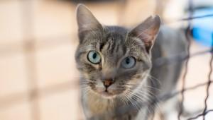 cat_000084833019_Medium