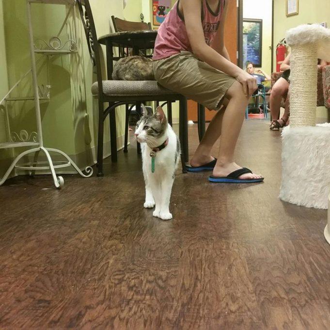 Lewisville Cat Cafe